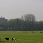 Biesland - Delft